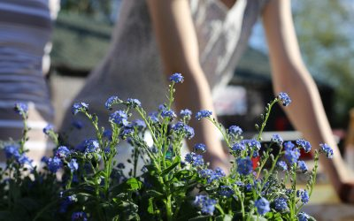 5 Springtime Home Maintenance Tips for Families On A Budget