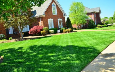 How to Keep your Lawn Green All Summer