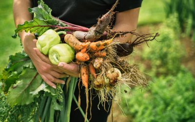 Best Practices For Growing A Fall Garden